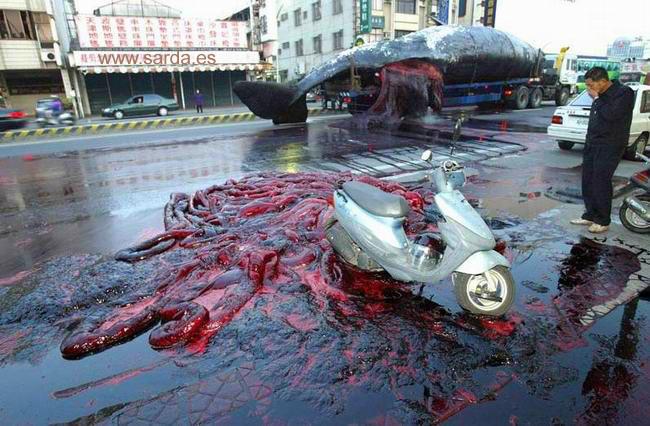 Ballenas explosivas de penes gigantescos